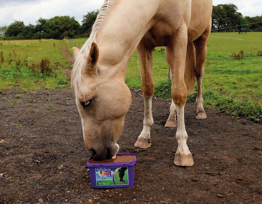 Horse - LIKIT