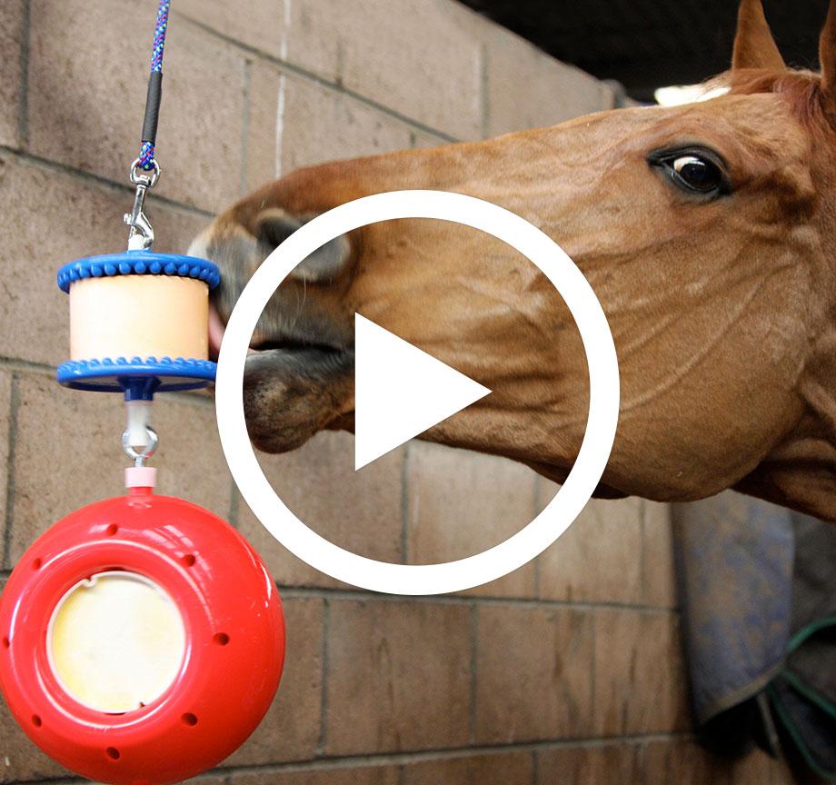 Likit Horse Lick